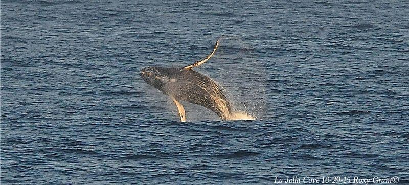 Whale 10_29_15
