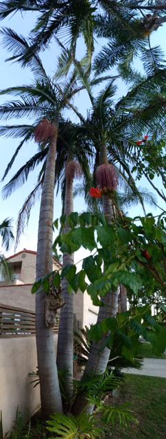 Palms 1
