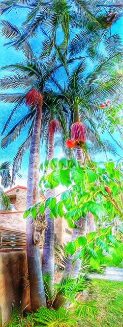 Palms 3