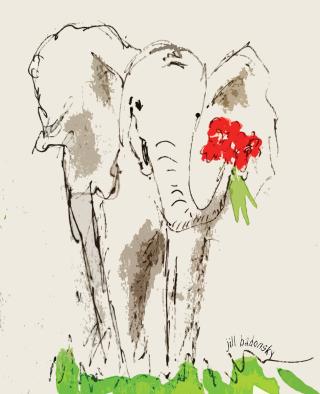 Elephant jill badonsky